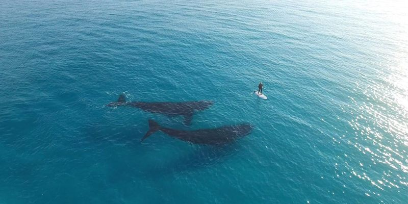surfing with whales