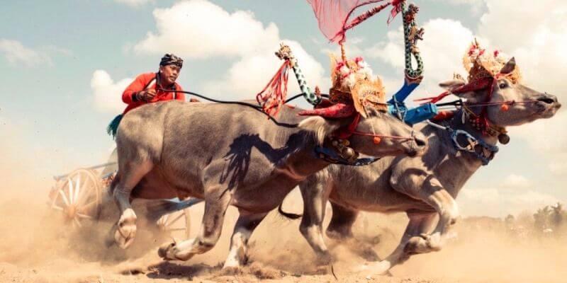 самые страшные фестивали бали